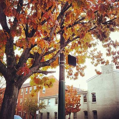 Art Print featuring the photograph Autumn South Charles Street by Toni Martsoukos