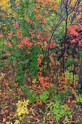 Photograph - Autumn Spills The Paint by Diane Alexander