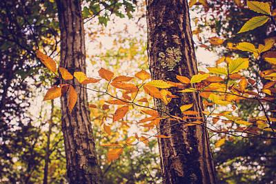 Photograph - Autumn Spirit by Sara Frank