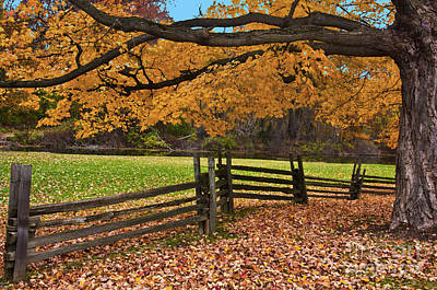 Photograph - Autumn Splendor 2 by Bill Woodstock