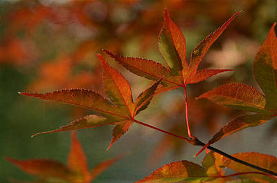 Photograph - Autumn Splendor 2 by Fraida Gutovich