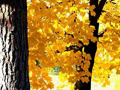 Autumn Splendor 2 Art Print by Will Borden
