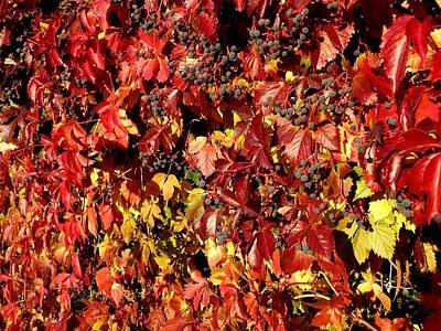 Autumn Splendor 8 Art Print by Will Borden