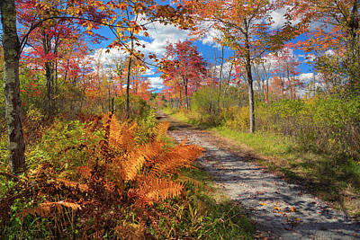 Old Country Roads Photograph - Autumn Splendor by Bill Wakeley