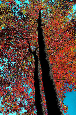 Nature Abstract Digital Art - Autumn Splendor by David Patterson