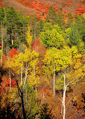 Photograph - Autumn Splendor by Greg Norrell