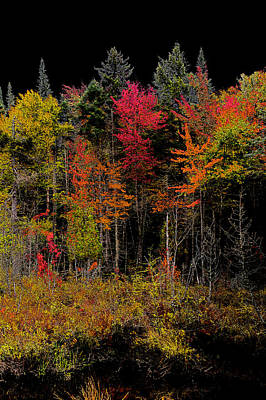Nature Abstract Digital Art - Autumn Splendor In The Adirondacks by David Patterson