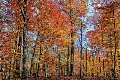Foliage Photograph - Autumn Splendor by Marcia Colelli