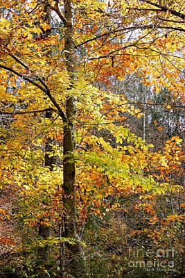 Photograph - Autumn Splendor by Todd Blanchard