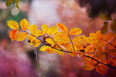 Digital Art - Autumn Splendor by Trina  Ansel