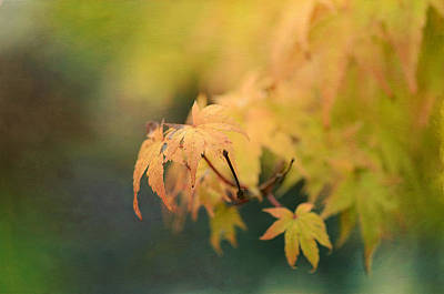 Photograph - Autumn Splendors 4 by Fraida Gutovich