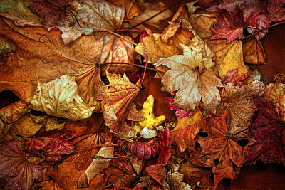 Photograph - Autumn Splendour by Lisa Knechtel