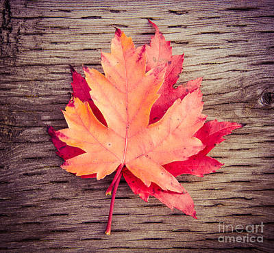 Photograph - Autumn Square by Cheryl Baxter