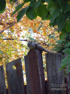Photograph - Autumn Squirrel I by Sonya Chalmers