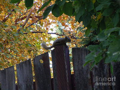 Photograph - Autumn Squirrel II by Sonya Chalmers