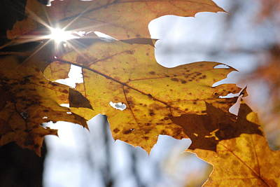 Photograph - Autumn Star by Amy Porter