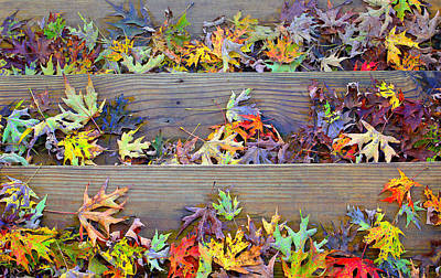 Photograph - Autumn Steps by William Schmid