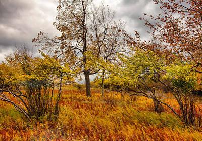 Autumn Storm At Dolly Sods West Virginia I Art Print by Dan Carmichael