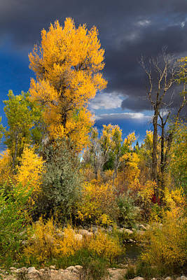 Photograph - Autumn Storm On The Popo Agie by Kathleen Bishop