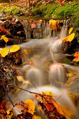 Photograph - Autumn Stream by Brent L Ander