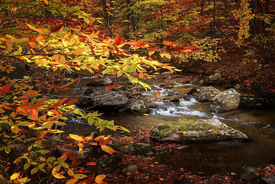 Autumn Stream Art Print by Bill Wakeley