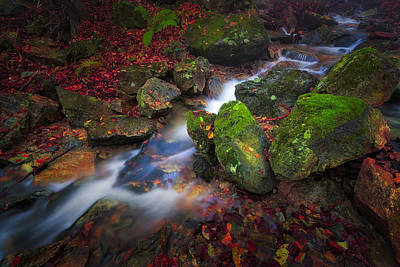 Photograph - Autumn Stream by Giovanni Allievi