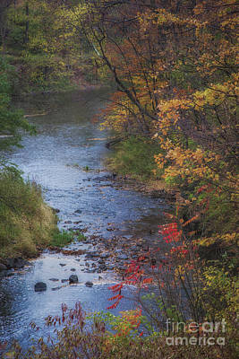 Autumn Stream Art Print by Michele Steffey