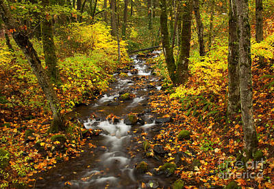 Autumn Stream Print by Mike  Dawson