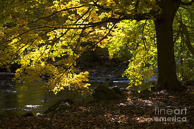 Photograph - Autumn Stream Painting Effect by Tom Brickhouse