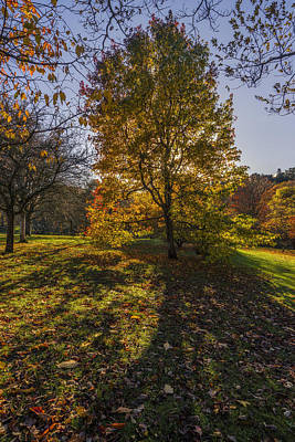 Photograph - Autumn Stroll V3 by Ian Mitchell