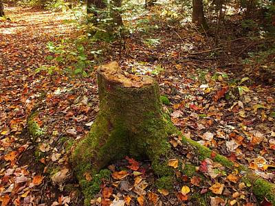 Photograph - Autumn Stump 1 by Gene Cyr