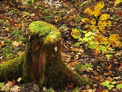 Photograph - Autumn Stump 2 by Gene Cyr