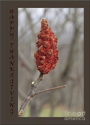 Photograph - Autumn Sumac  Thanksgiving Greeting Card #1 by Andrew Govan Dantzler