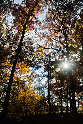 Photograph - Autumn Sun by George Taylor