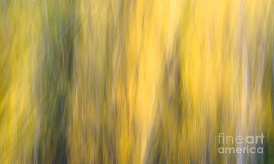 Photograph - Autumn Sun by Tamara Becker
