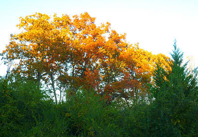 Art Print featuring the photograph Autumn Sunlight by Pete Trenholm
