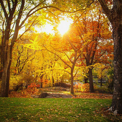 Fall Foliage Photograph - Autumn Sunset - New York City - Central Park by Vivienne Gucwa