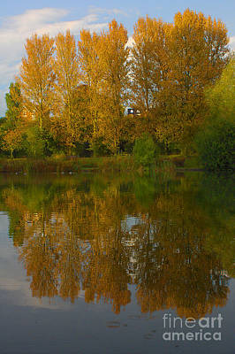 Photograph - Autumn Sunset Tree Reflections by Jeremy Hayden