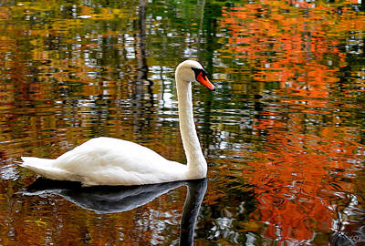 Reds Of Autumn Photograph - Autumn Swan by Lourry Legarde