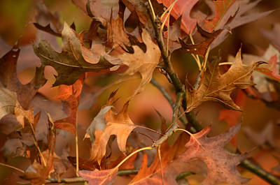 Photograph - Autumn Swirl by Ann Bridges