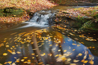 Photograph - Autumn Swirl by Leda Robertson