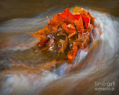 Photograph - Autumn Swirls by Susan Candelario