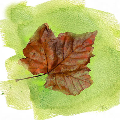 Digital Watercolor Photograph - Autumn Sycamore Leaf by Betty LaRue