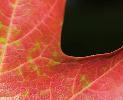 Art Print featuring the photograph Autumn  by Tara Lynn
