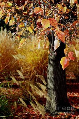 Photograph - Autumn  by Theresa Ramos-DuVon