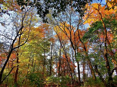 Photograph - Autumn Through The Trees by Ron Grafe