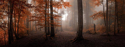 Haze Photograph - Autumn by Tom Meier