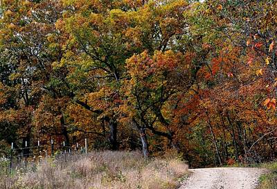 Photograph - Autumn Trail 2 by Deena Stoddard