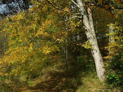 Photograph - Autumn Trail by Carolyn Jacob