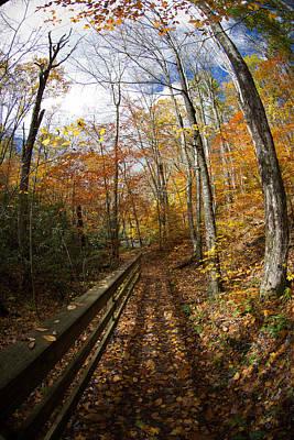 Autumn Trail Art Print
